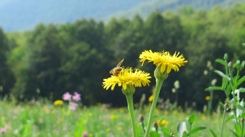 Slovenia – The Beekeepers of Europe