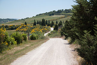 Winding down the road in Tuscany